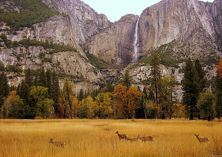 View of Yosemite Falls from Yosemite Chapel