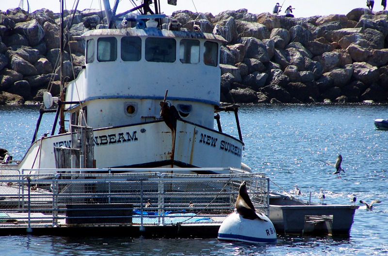 8 harbor seal and boat