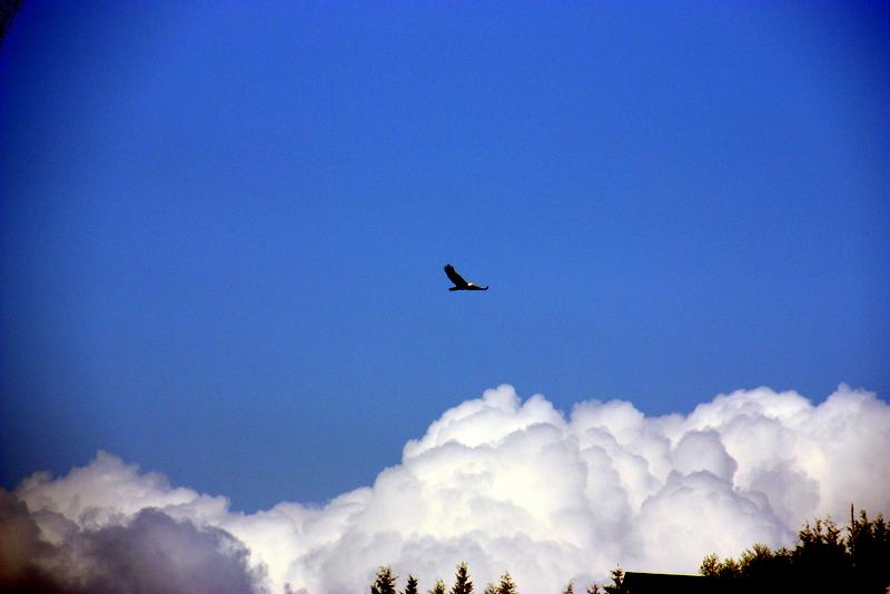 Sit eagle soar2 x800