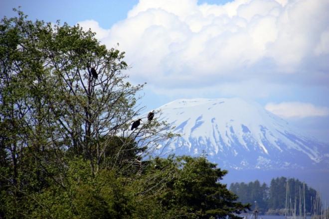 Sit eagles volcano x800